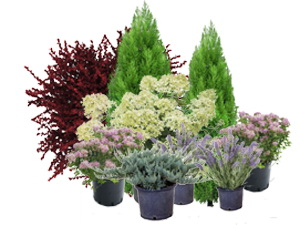 Растения1